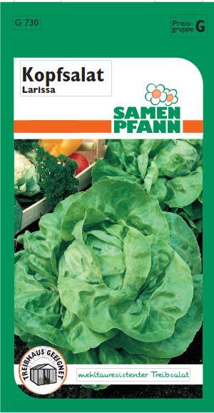 Kopfsalat Larissa ca. 200 Pfl
