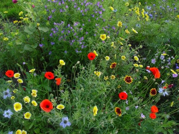 Blumenmischung Insektennektar