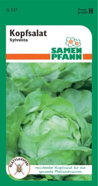 Kopfsalat Sylvesta ca. 100 Pfl. Blattlausfrei
