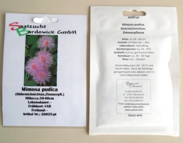 Rührmichnichtan oder Sinnpflanze (Mimose)