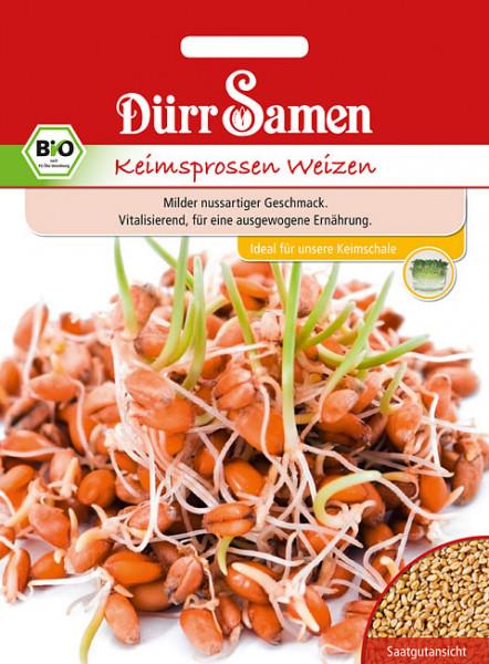 BIO Keimsprossen Weizen