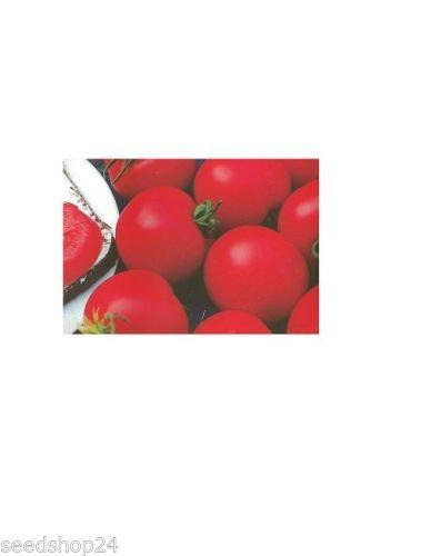Tomate Matina, kartoffelblättrig
