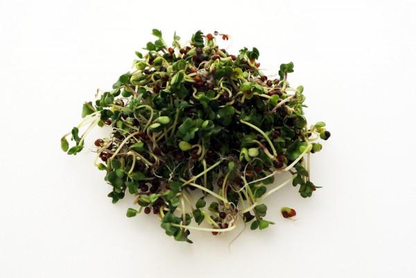 BIO Keimsprossen Grünkohl, Palmkohl Black Tuscany Keimsaat Mikrogrün Microgreen