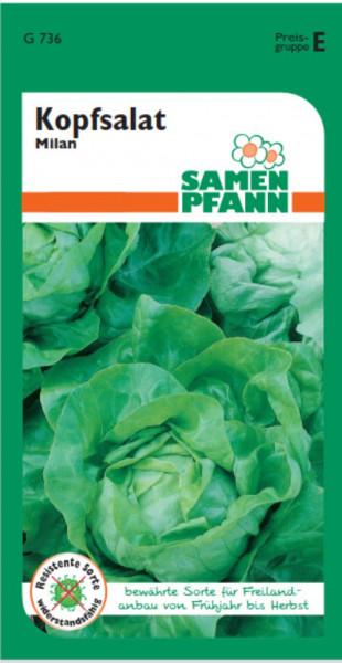 Kopfsalat Milan ca. 100 Pfl. Freilandanbau