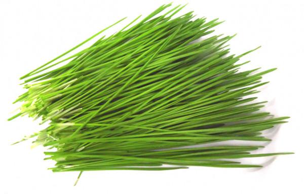 BIO Keimsprossen Weizen Keimsaat Microgreens