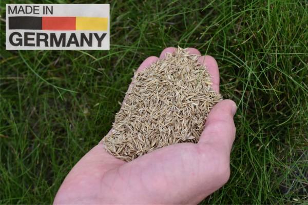 Dürreresistente Rasenmischung Schattenrasen trockener Standort