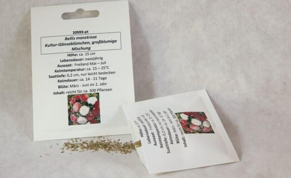 Kultur-Gänseblümchen großblumige Mischung